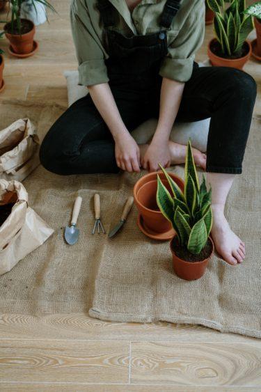 意外と知らなかった観葉植物の鉢の植え替え方法